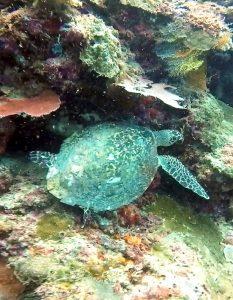 Sipadan_Borneo_Scuba_Diving_Ultimate_Guide_Malaysia_Asia_Snorkelling_Free_Diving_TravelBlogger_Adventure_Blog_Sassy_Pilgrim_Sabah_Tourism_