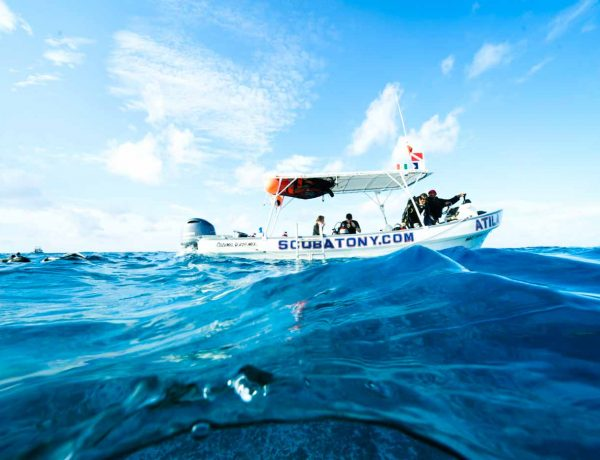 THE ULTIMATE GUIDE TO SCUBA DIVING IN COZUMEL