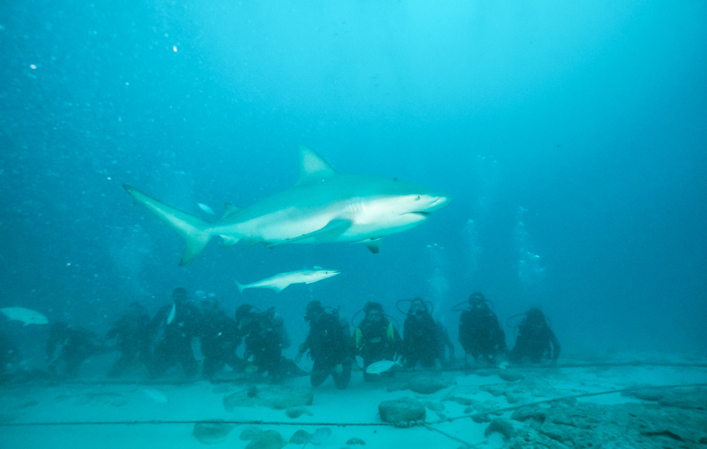 Scuba_Diving_With_Bull_Sharks_In_Playa_Del_Carmen_Mexico_Qintana_Roo_Yucatan_Peninsula_Riviera_Maya_Cozumel_Blog_The_Sassy_Pilgrim_Indian_Solo_Traveler_Girl_Scuba_Diver_Inia_Travel_Blogger_