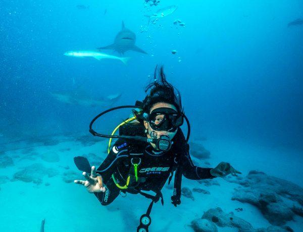SCUBA DIVING WITH BULL SHARKS IN PLAYA DEL CARMEN