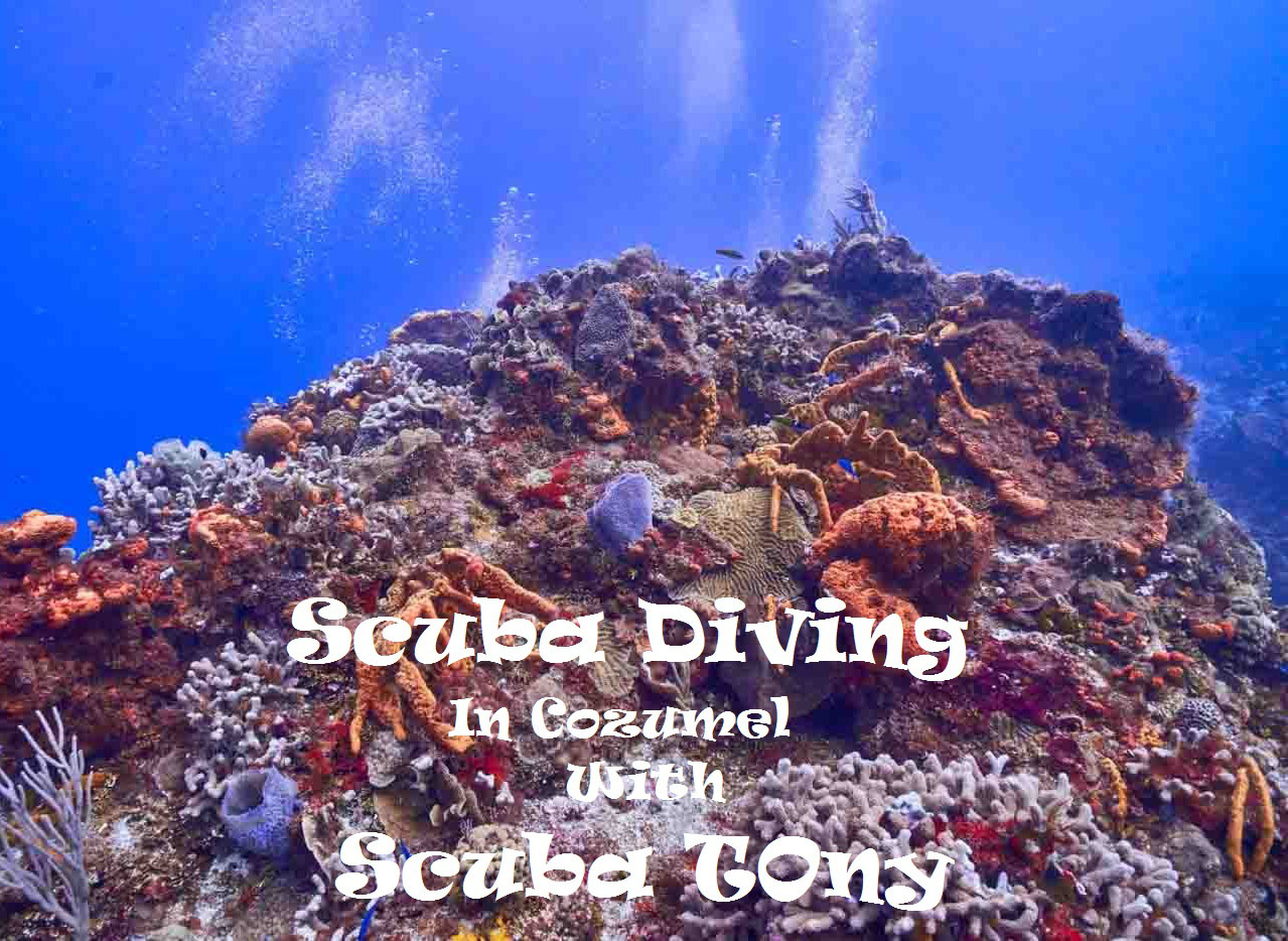 Scuba_Diving_Cozumel_Scuba_Tony_Mexico_Travel_Blogger_Indian_The_Sassy_Pilgrim_America_Quintana_Roo_Yucatan_Riviera_Maya_Adventure_