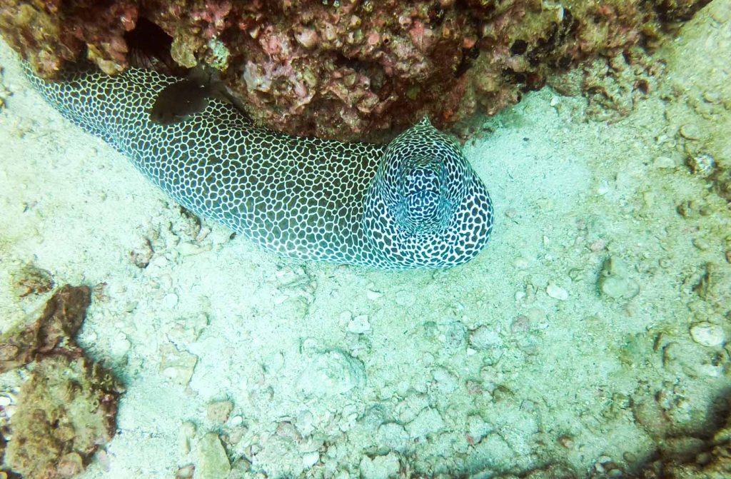 Oman_Muscat_Bimmah_Sinkhole_Road_Trip_Sinkhole_Natural_Pools_Wadis_Shab_Solo_Travel_Wahiba_Sands_Desert_Glamping__Scuba_Diving_Daymaniyat_Islands_Al_Sawade_Beach_Resort